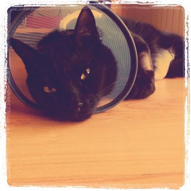neo, después de la operación